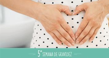 5 semanas de gestação